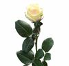 Šopek vrtnic prijateljstva