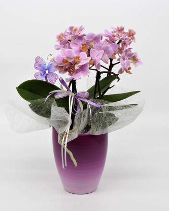 Slika Aranžirana orhideja 1