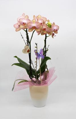 Slika Aranžirana orhideja 2