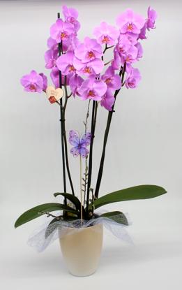 Slika Aranžirana orhideja 5
