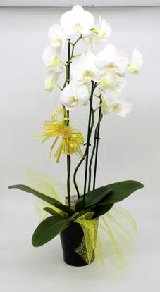 Slika Aranžirana orhideja 6
