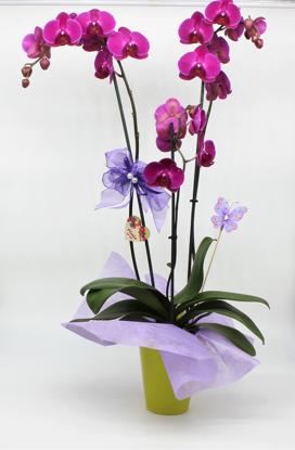 Slika Aranžirana orhideja 7
