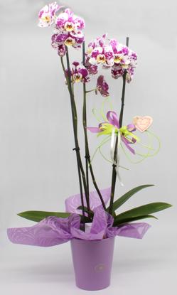 Slika Aranžirana orhideja 9