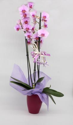 Slika Aranžirana orhideja 11