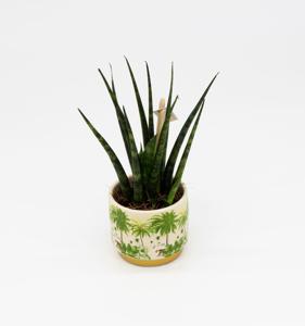 Slika za kategorijo Kaktusi