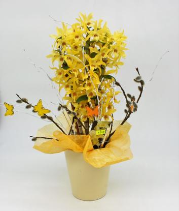 Slika Aranžirana orhideja Dendrobium